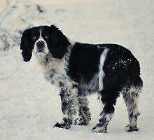 Tasha In The Snow by Stan Owen