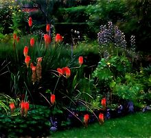 The red hot poker rules by missmoneypenny