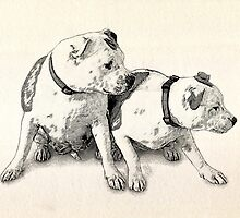 Two Bull Terriers by Michael Tompsett