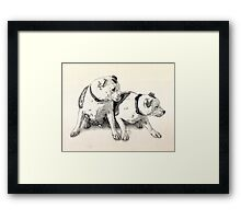 Two Bull Terriers Framed Print