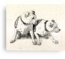 Two Bull Terriers Metal Print
