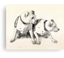 Two Bull Terriers Metal Print