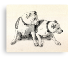 Two Bull Terriers Canvas Print