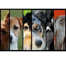The Many Faces of Man's Best Friend Photographic Print