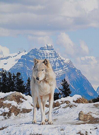 White Grey Wolf & Rocky Mountains Art  by Skye Ryan-Evans