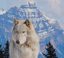 White Grey Wolf & Rocky Mountains Art  Sticker