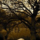 Sheep under tree by Alien Banana