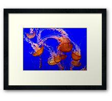 Jellies 2 Framed Print