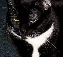 Eartha the cat by David Chesluk