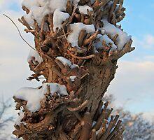 Man and Natures Sculpture by Robert Abraham