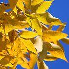 Yellow Leaves by Milena Ilieva