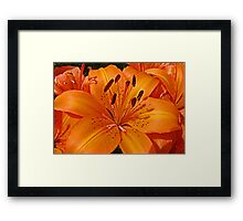Lilies of the Day Framed Print