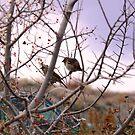 Roadside birds by dandefensor