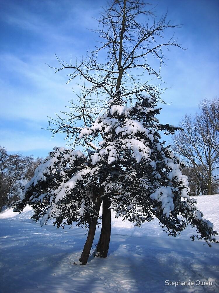 Icy blue by Stephanie Owen
