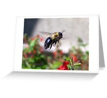 Bumble Bee - Hovering over red flower Greeting Card