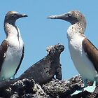 blue footed boobies with iguana by tripi100