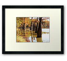 Cypress Autumn Framed Print