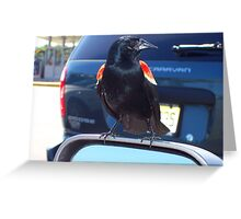 Redwing Blackbird on sideview mirror Greeting Card