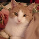 Louis ( Ginger Tabby ) by AnnDixon
