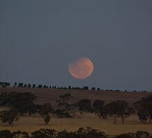 Lunar Eclipse by Murray Wills
