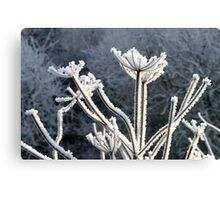 The Beauty of Frost Canvas Print