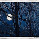 Batik Moon by Mary Ann Reilly