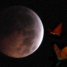 Front Row Seat - Lunar Eclipse by Dennis Stewart