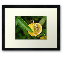 Alnwick Gardens Framed Print