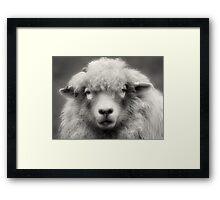 Sheepish Looks Framed Print