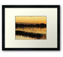Black Swans on Sunset Framed Print