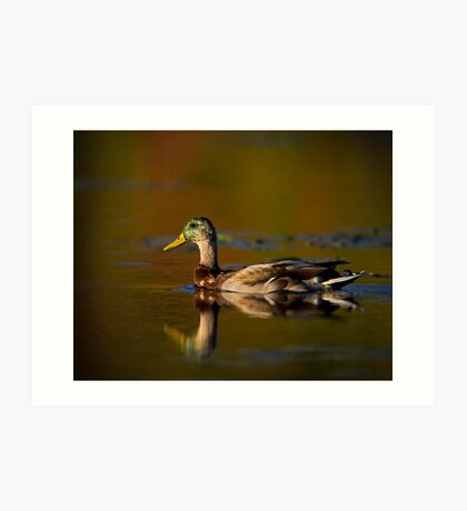 Cross-dressed Duck Art Print