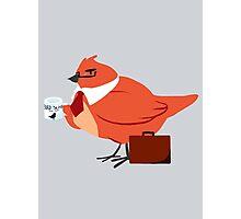 bird lawyer Photographic Print