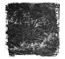 The Atlas of Dreams - Plate 20 (b&w) Photographic Print