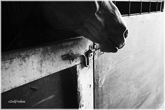 A Horse's Life by Emily Peak