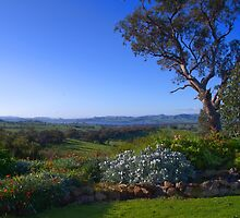 A view from the house by ndarby1