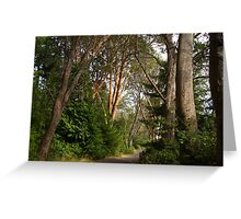 Oh the trees! Greeting Card