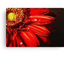 Beauty in nature. Canvas Print