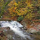 Laurel Creek Cascades III by Gary L   Suddath