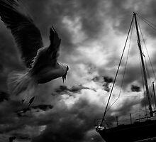 dark wind by vtango