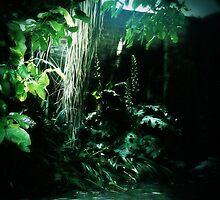Secret Garden (5) by Michelle  Evans-Catherall