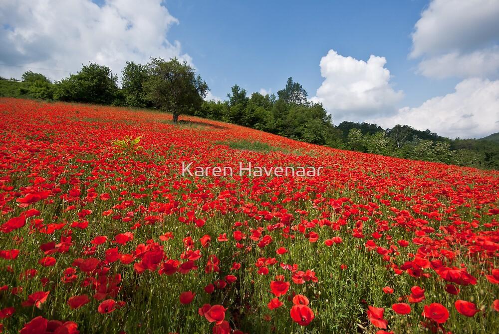 Poppies all over the place by Karen Havenaar
