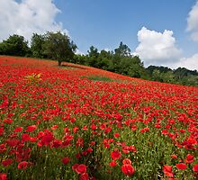 Poppies all over the place by Karen Havenaar