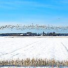 Geese over a winterly Serooskerke by Adri  Padmos