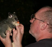 A possum in the hand is... priceless by David B Sneddon