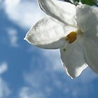 White Flower by Eija