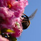 Busy BumbleBee II by vbk70