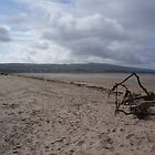 Driftwood - Ayrshire, Scotland by GraceEmily27
