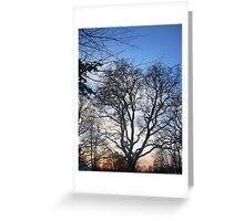 Winter skies Greeting Card