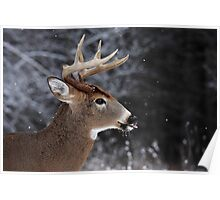 Catching Snowflakes - White-tailed Deer Poster