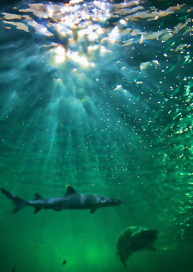 Predators! Sydney Aquarium - Australia by Bryan Freeman